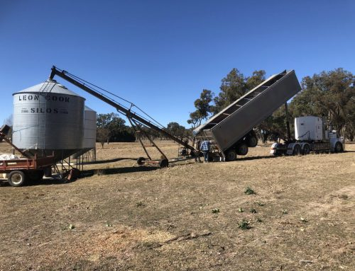 Receiving another load of faba beans